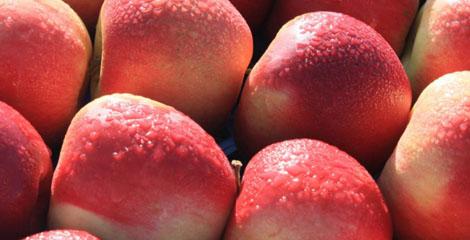 Anunţuri recente – Ocazie achiziţie mere