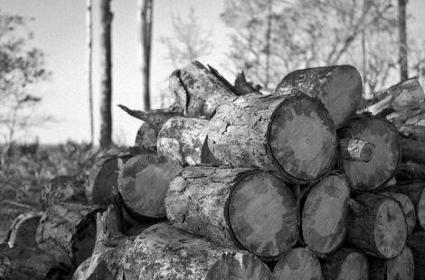 material_lemnos
