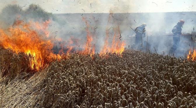 Au ars 5 hectare de grâu în Ratoș. Incendiu a pornit de la o combină agricolă